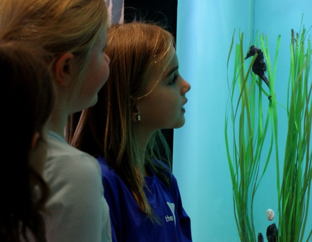 children at acquarium