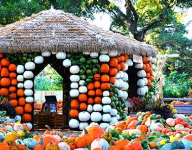 Pumpkins at Dallas arb