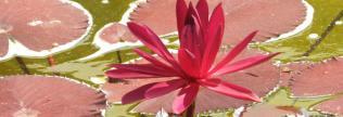 dallasarboretum.org